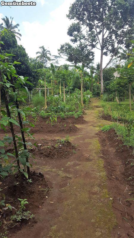 Bali Farm Cooking. Gemüsebeete.