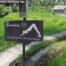 """Ubud herabschaunder Hund. Downward facing dog. Ein Schild mit einer Frau das sagt / a sign with a woman saying: """"Beware! Of downward facing dogs"""""""
