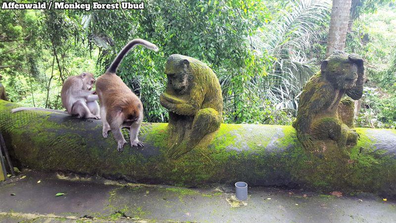 Ubud Monkey Forest/Affenwald. Zwei lebendige Affen und zwei aus Stein auf einer niedrigen Mauer am Wegesrand. Two living monkeys and two of stone on a low wall along the way.