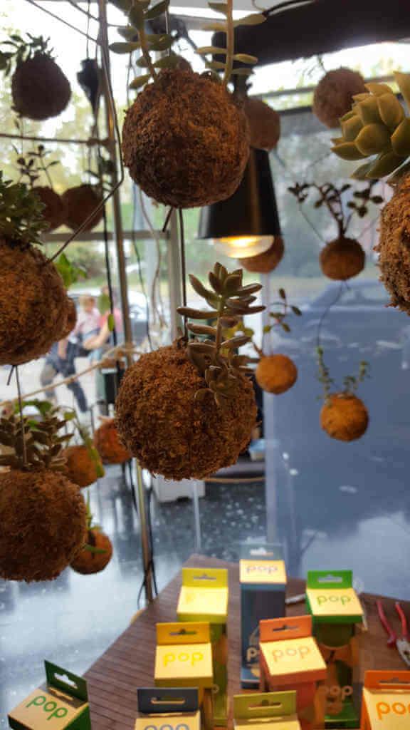 Pflanzenkugeln zum Hängen